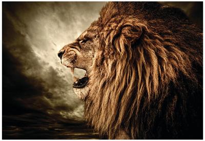 Roaring Lion Against Stormy Sky Plakater