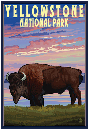 Yellowstone National Park - Bison and Sunset Posters