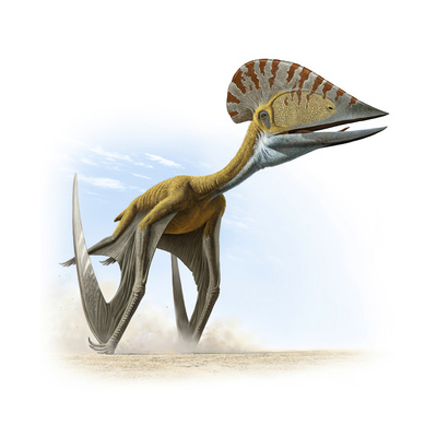 Tupuxuara, a Type of Pterosaur, Lived in Present Day Brazil Giclee Print by Raul D. Martin
