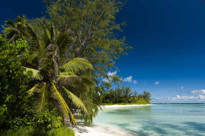 Denis Island, Seychelles, Indian Ocean, Africa Photographic Print by  Sergio