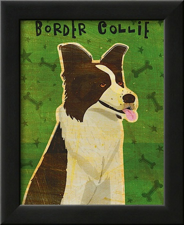 Border Collie Posters by John Golden