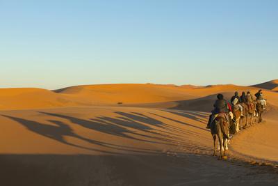 Morocco, Merzouga. Desert Caravan and Dromedaries Photographic Print by Michele Molinari
