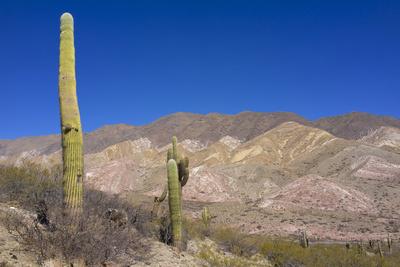 Argentina, Salta, Cardones National Park. Cardon Cactus Photographic Print by Michele Molinari