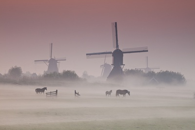 Sunrise and Morning Fog with Silhouetted Windmills and Horses in Field Kinderdijk, Netherlands Photographic Print by Darrell Gulin