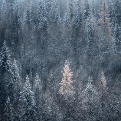 First Snow Photographic Print by Ursula Abresch