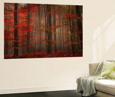 Enchanting Red Wall Mural by Philippe Sainte-Laudy