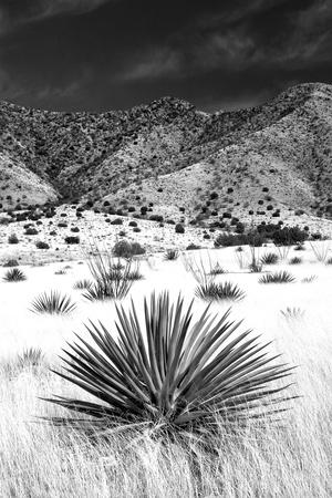 Desert Grasslands I BW Photographic Print by Douglas Taylor