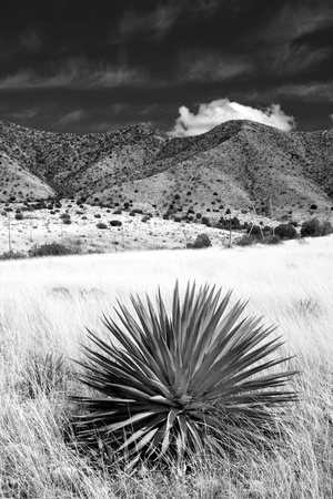 Desert Grasslands II BW Photographic Print by Douglas Taylor