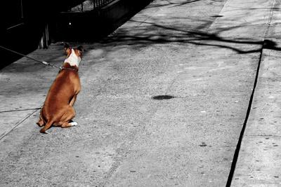 Brown & White Dog on Black & White Street Photo