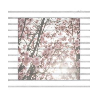 Cherry Blossom Stripe Posters by Ashley Hutchins