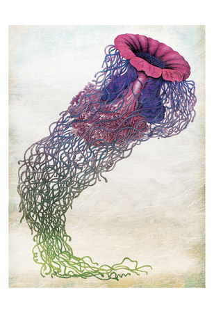 Jellyfish Posters by Jace Grey