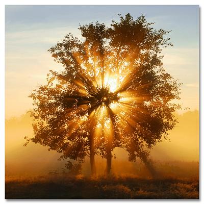 Beams of Sunlight Print
