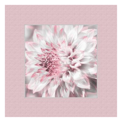 Dahlia Pinks 5 Prints by Suzanne Foschino