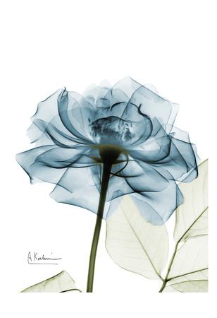 Teal Rose Poster by Albert Koetsier