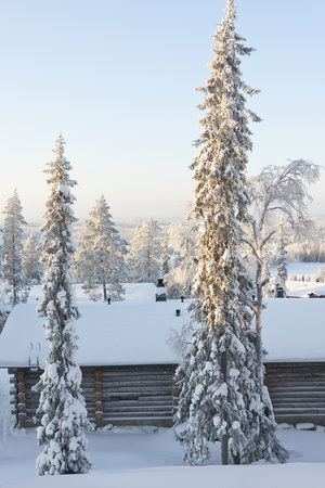 Snowy Log Cabin between Trees Photographic Print by  Risto0