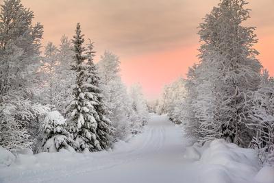 Winter Landscape in Lapland Photographic Print by  udvarhazi