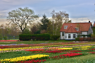 Multicolored Tulips Field in Keukenhof, the Netherlands Photographic Print by  sborisov