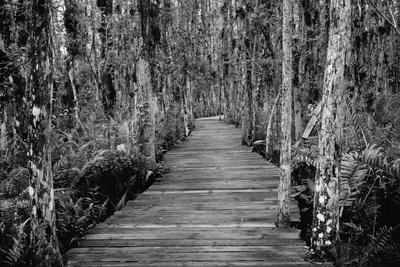 Boardwalk through Everglades Florida, USA Photographic Print by Radius Images
