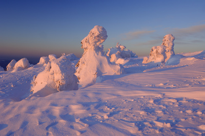 Snow-Covered Trees at Sunrise Photographic Print by Martin Ruegner