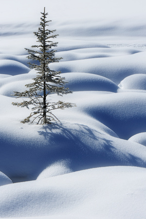 Lone Tree in Snow Photographic Print by Yu Liu Photography