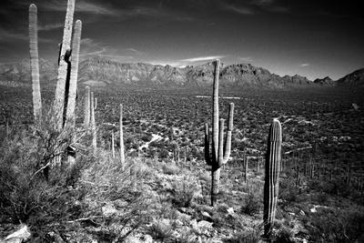 Arizona, Tucson, Saguaro Np, Brown Mountain Photographic Print by James Denk