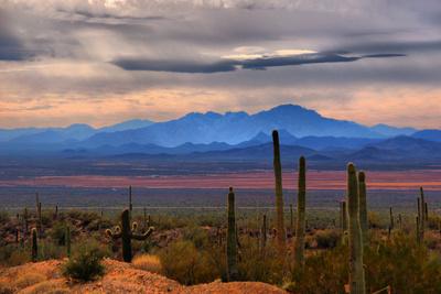 Sonoran Desert Floor Photographic Print by Lawrence Goldman Photography