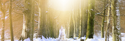 Long, Snowy Tree-Lined Avenue Photographic Print by Kathy Collins