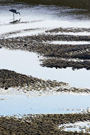 Grey Heron Fishing Photographic Print by Richard Packwood