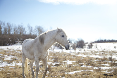 White Horse in Prairie Field in Early Spring Photographic Print by Lori Andrews