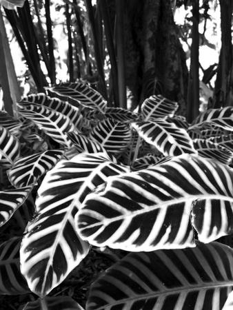 Tropical Plants on the Rainforest Floor Photographic Print by Melinda Podor