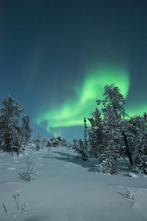 Snow Covered Trees with Moonlight and Aurora Photographic Print by Michael Ericsson