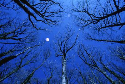 Full Moon over Oak Woodland, mid Wales, Uk Photographic Print by Richard Packwood