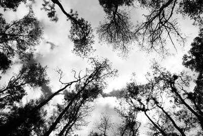 Dark Forest Photographic Print by  janzgrossetkino