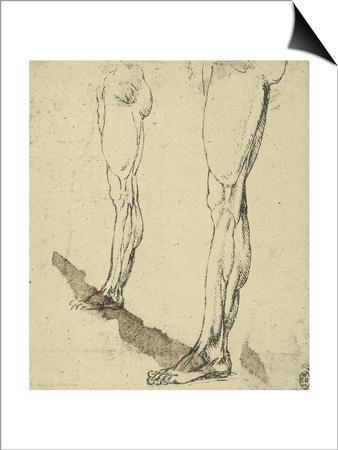 Study of Legs, Drawing, Royal Library, Windsor Prints by  Leonardo da Vinci
