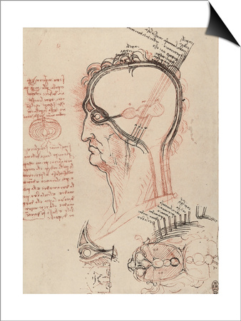 Head Section with the Anatomy of the Eye, Drawing, Royal Library, Windsor Poster by  Leonardo da Vinci