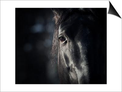 Horse Eye In Dark Posters by  mari_art