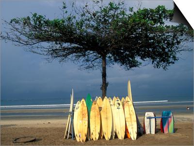 Surfboards Lean Against Lone Tree on Beach in Kuta, Bali, Indonesia Poster by Paul Souders
