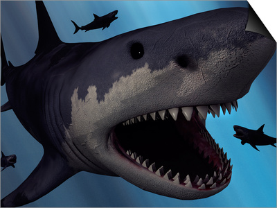 A Megalodon Shark from the Cenozoic Era Posters by  Stocktrek Images