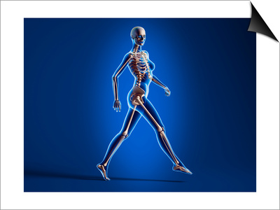 X-Ray View of a Naked Woman Walking, with Skeletal Bones Superimposed Print