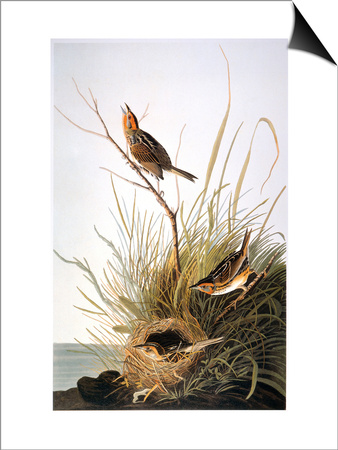 Audubon: Finch Prints by John James Audubon