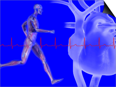Runner, Male Likeness Showing Musculature and Skeleton Against an Ekg and Heart Poster by Carol & Mike Werner