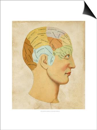 Vintage Phrenology Prints