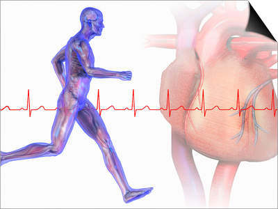 Runner, Male Likeness Showing Musculature and Skeleton Against an Ekg and Heart Prints by Carol & Mike Werner