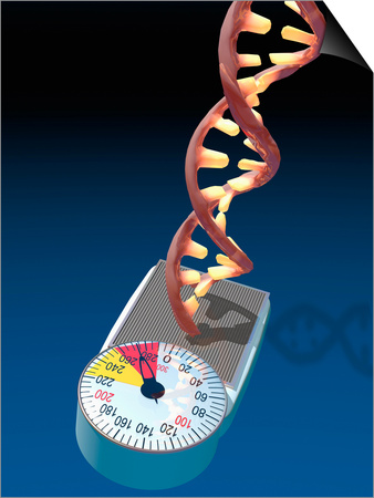 Biomedical Illustration of a DNA Molecule on a Bathroom Scale Illustrating Posters by Carol & Mike Werner