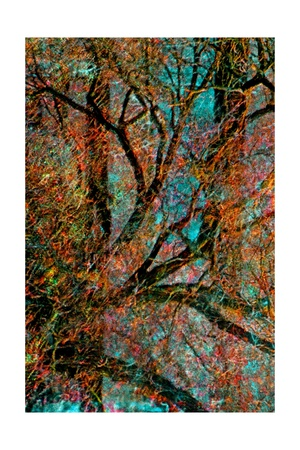 Tree Giclee Print by Andre Burian