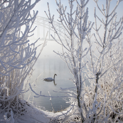 Winter Swan Photographic Print by E.M. van Nuil