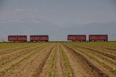 Agriculture Photographic Print by Seth Joel