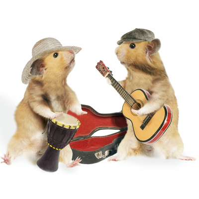Hamsters Playing Musical Instruments Photographic Print