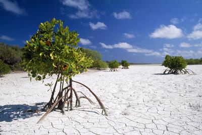 Seychelles Mangrove Photographic Print