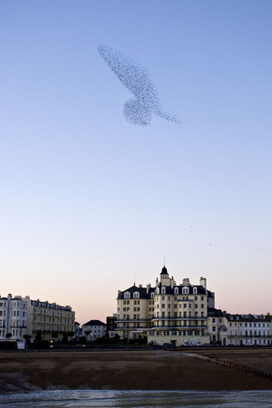 Starlings Shape Above Urban Building Photographic Print